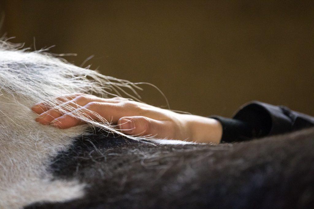 Kranio-sakraalihoito hevoselle